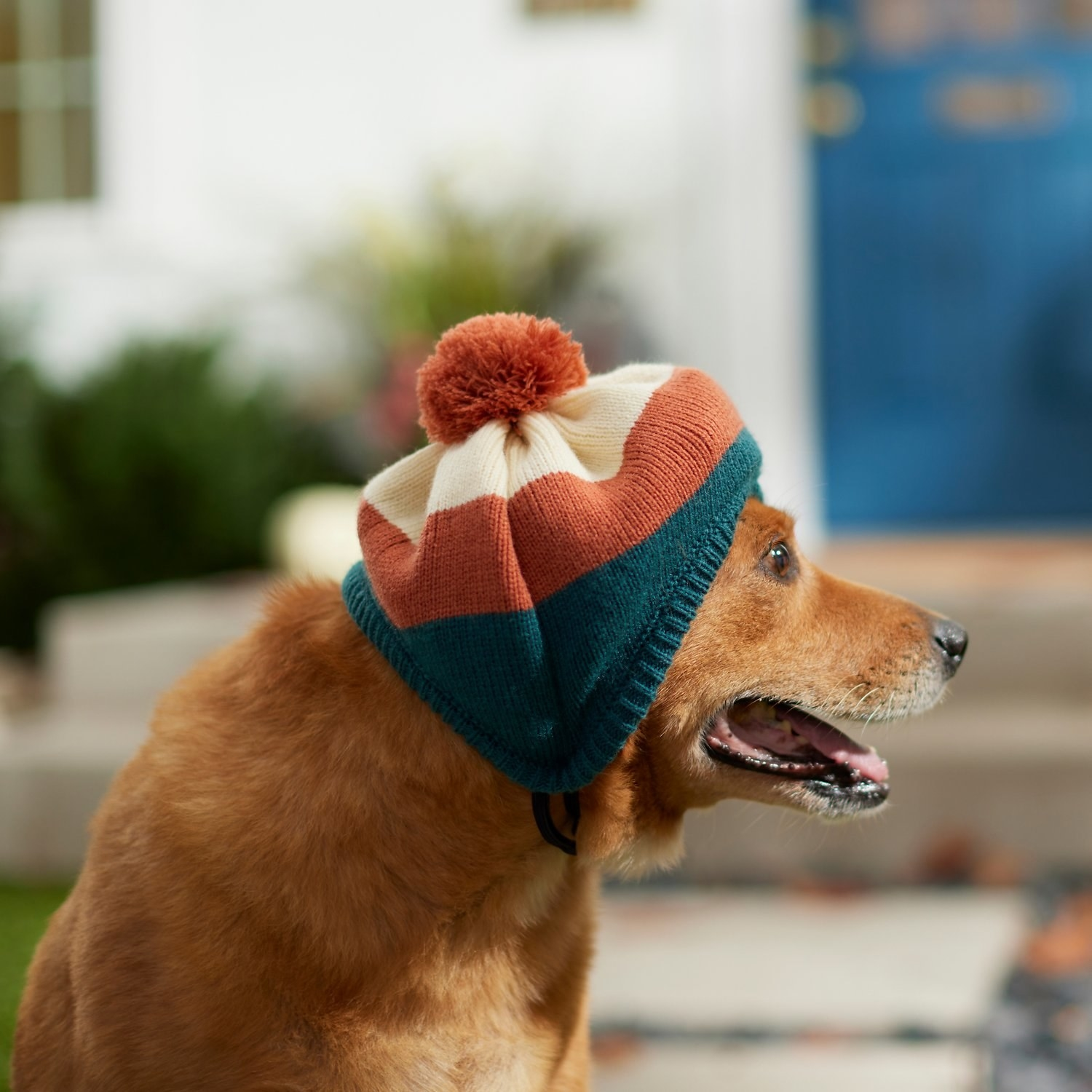 a dog wearing the cream, orange, and teal striped hat