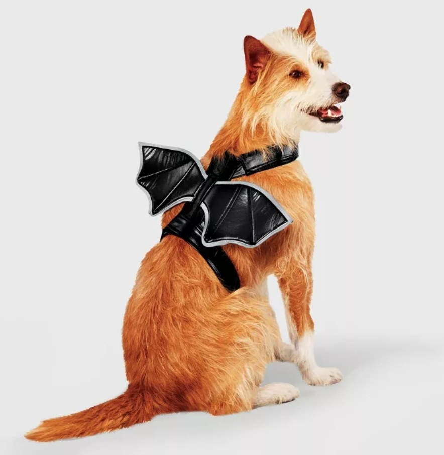 a dog in the bat wing harness