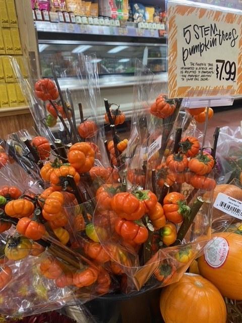 5 Stem Pumpkin Trees