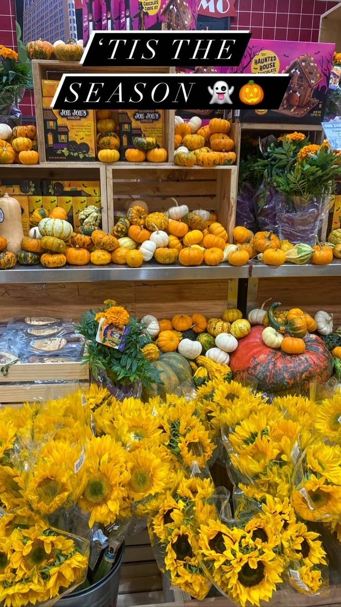 Fall themed products at Trader Joe's.