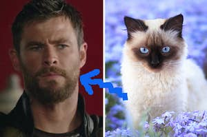 A close up of Thor as he glares at someone off screen and a close up of a light colored cat