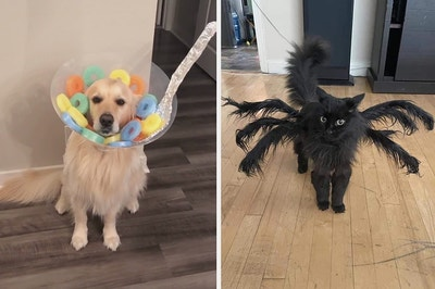 A dog dressed as a bowl of cereal, and a cat as a spider