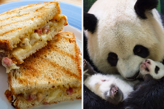 Want To Know Which Animal Represents You? Just Make A Cheese Toastie To Reveal It