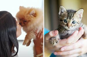 A Kardashian is kissing a puppy with a woman holding a kitten on the right