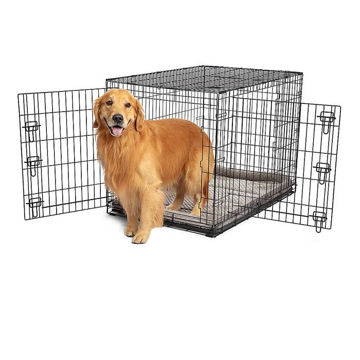 Wire dog crate and golden retriever