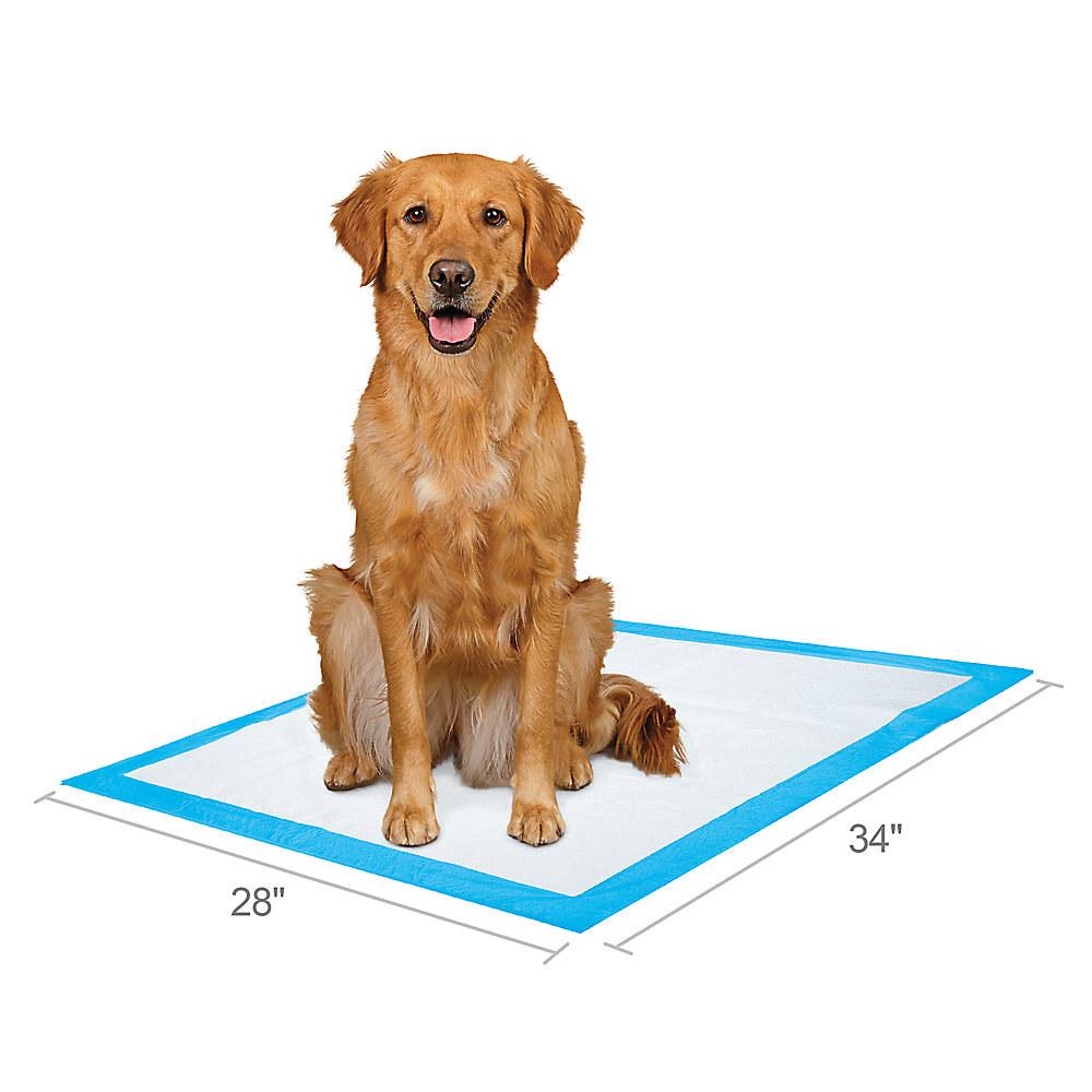 dog sitting on pad