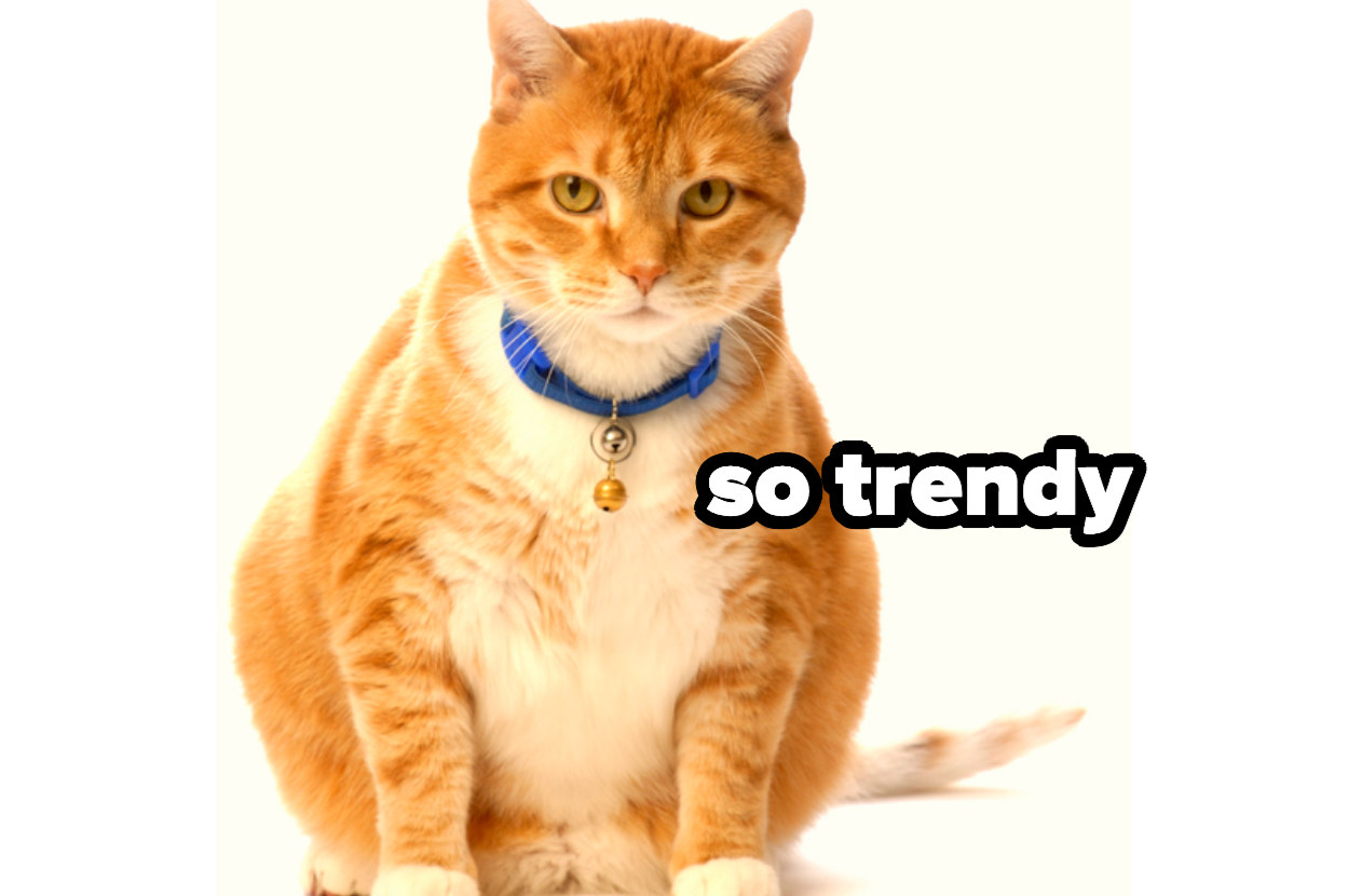 """""""so trendy"""" over a cat wearing a collar with a bell on it"""
