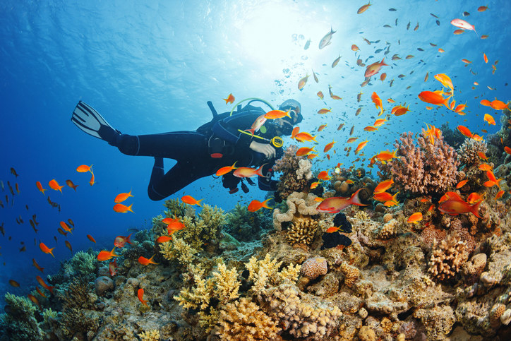 Scuba diver surrounded by fish and coral