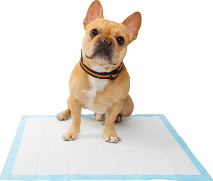 Dog on potty pad.
