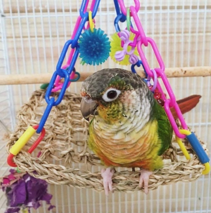 A flying trapeze bird toy
