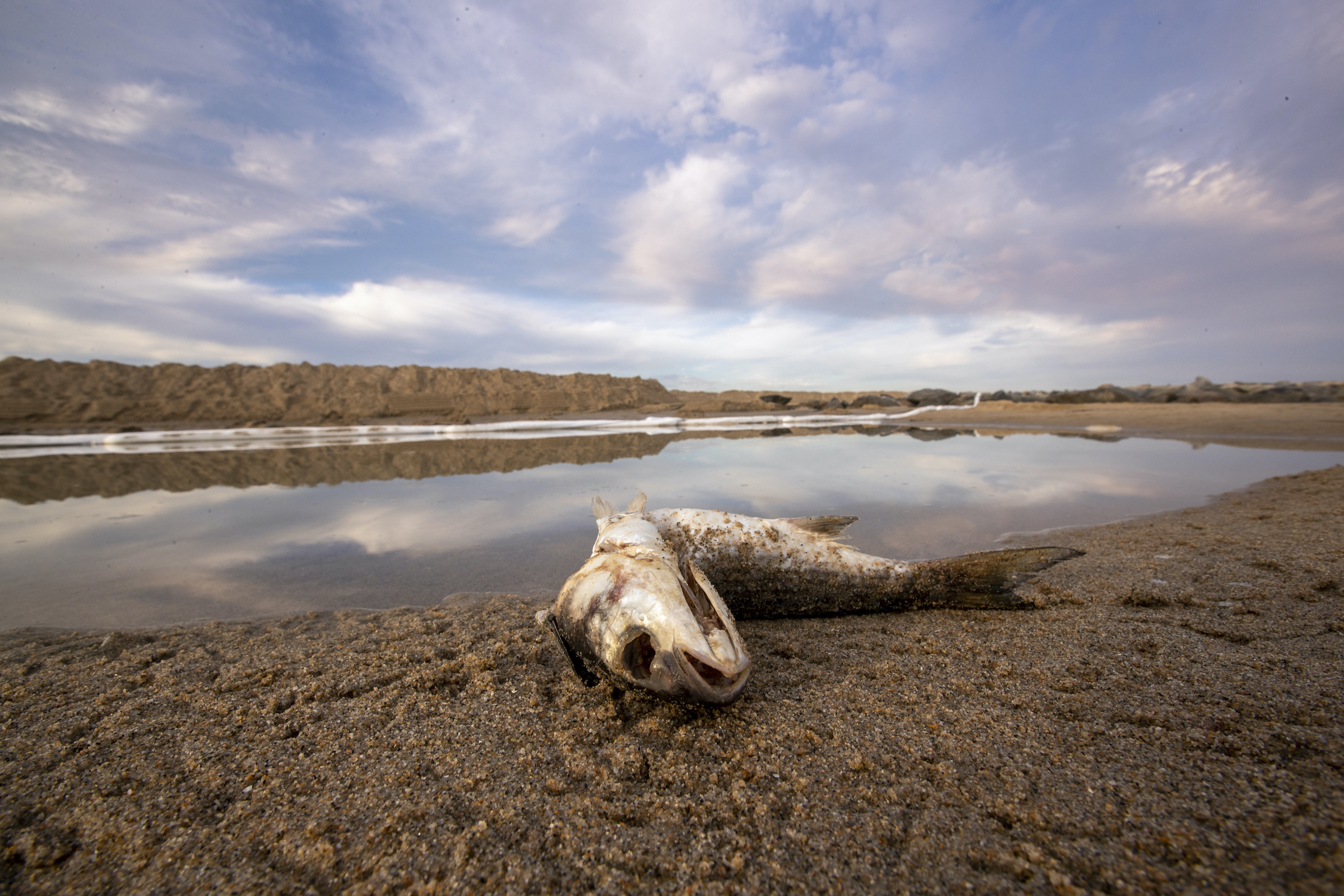 The carcass of a large fish, its skull visible, lies on blackened sand