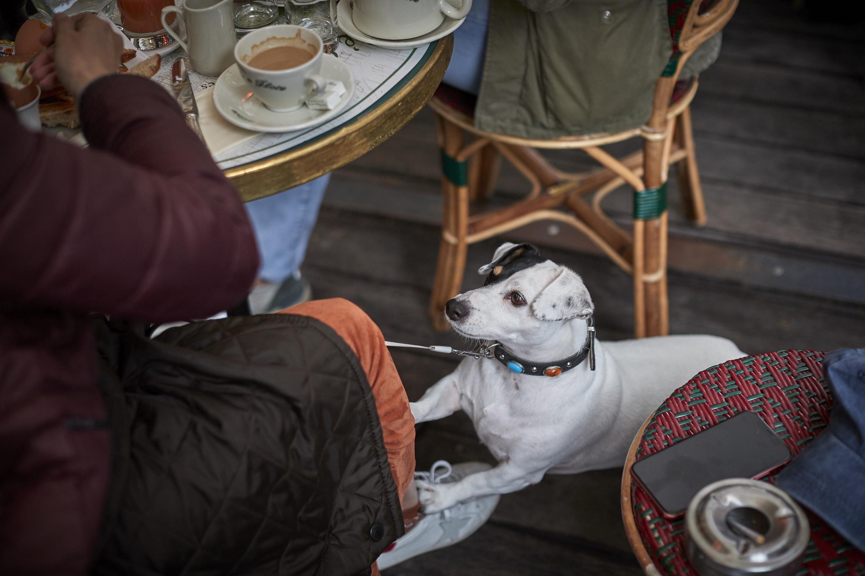 Dog sitting underneath a restaurant table on a patio