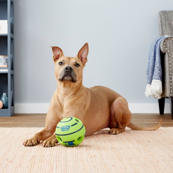 An image of a dog with a wobble wag giggle ball dog toy