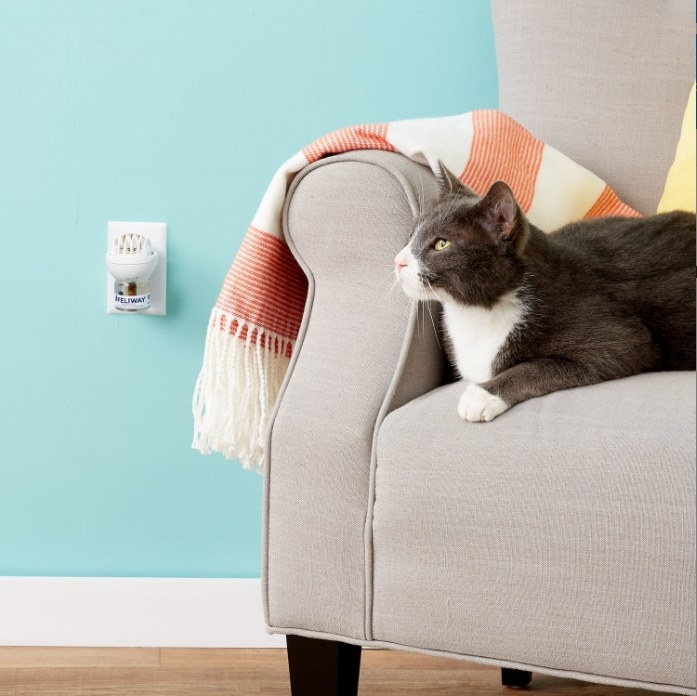 A calming diffuser for cats