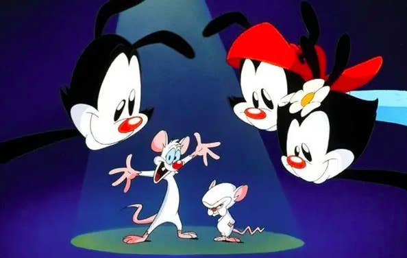 pinky and the brain and the three animaniacs