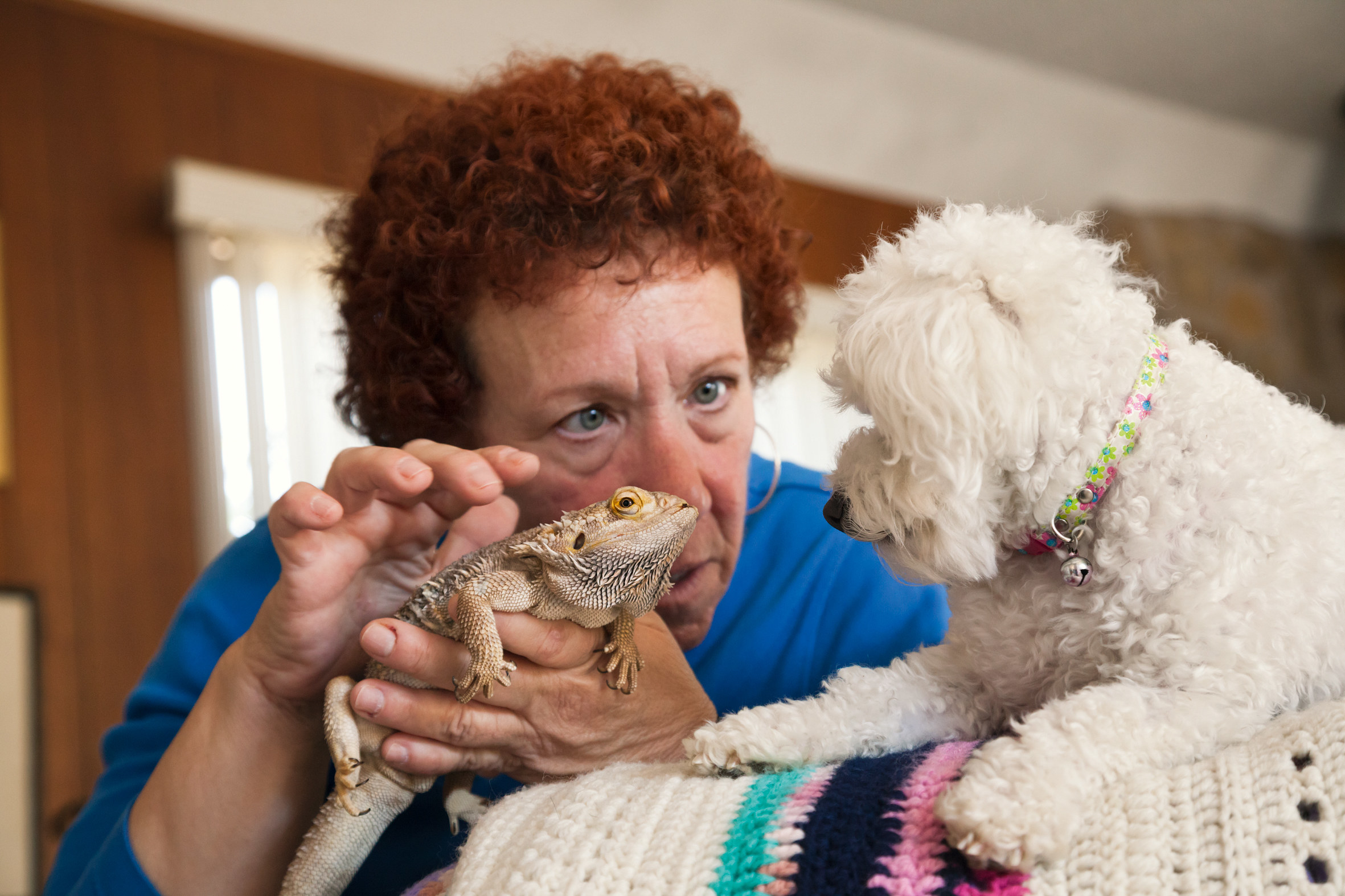 a woman pets an iguana and looks at a small white dog