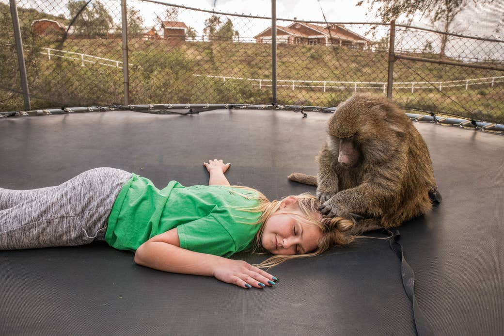 Girl lies on trampoline while monkey touches her hair