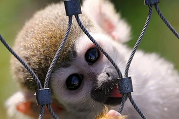 15 Cute Animals That Can Kill You