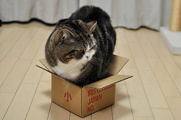 The Best Gifs Of Maru The Internet S Favorite Cat