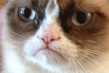 Image result for not impressed cat