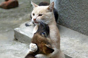 cats-and-dogs-hugging-it-out-1-12289-132