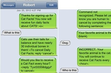 sign someone up for cat facts cat hd wallpaper utsprokids org