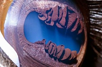Beautiful CloseUps Of Animal Eyes - 24 detailed close ups of animal eyes