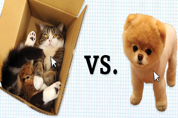 Why Dogs Are Better Than Cats Buzzfeed