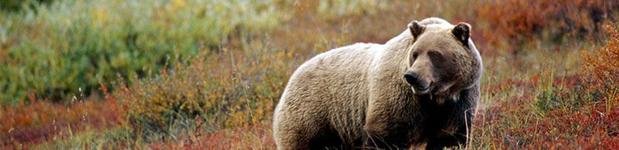 bearfeed