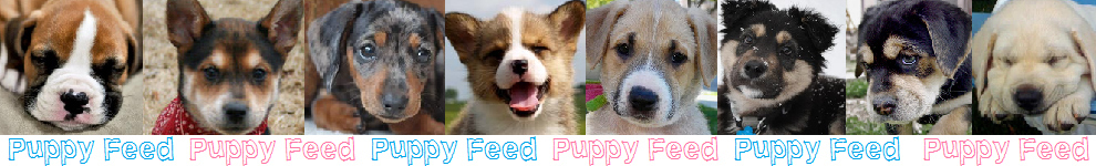 puppyfeed