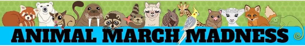 Animal March Madness