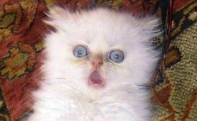 """""""oh noez! my kitteh fer just turned wite iz so fwightened!"""""""