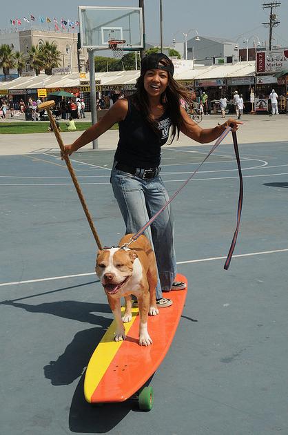 Dog On A Longboard