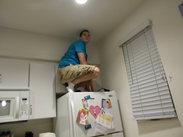 Owling In The Kitchen