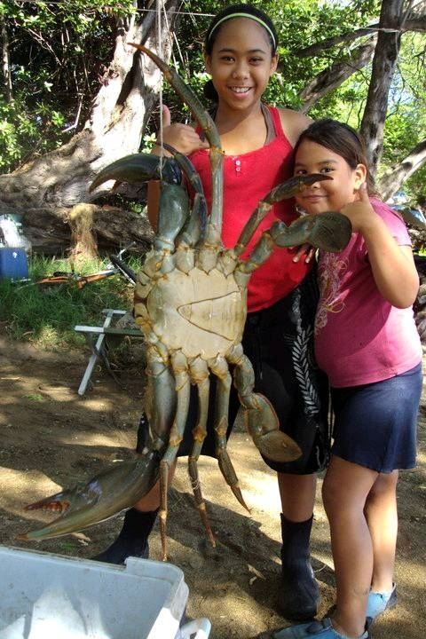 They're holding giant crabs
