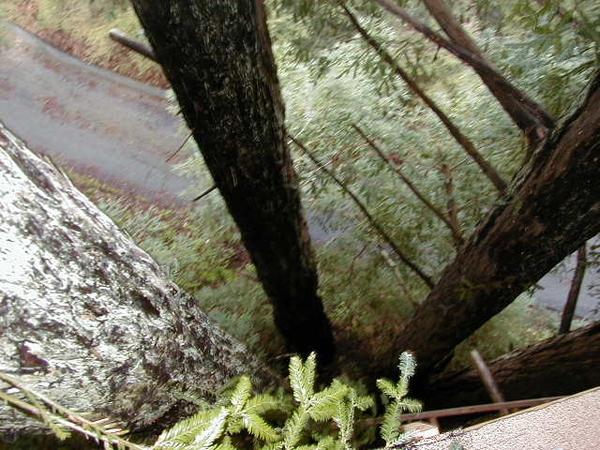 Climb A Large Tree