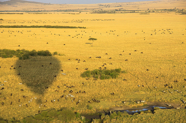 Kenya (Africa)