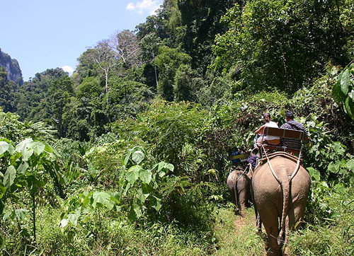Jungle Safari Ride By Elephant