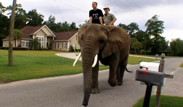 Riding An Elephant Through A Suburban Neighborhood