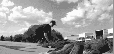 Ollieing Over An Alligator