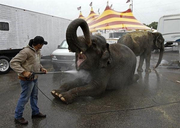 Circus Elephant Trainer