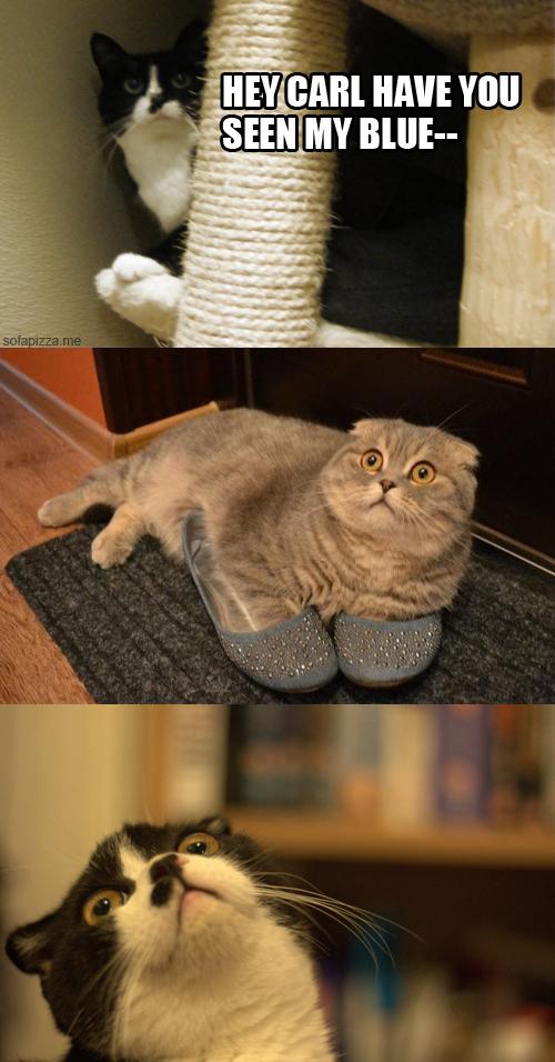 This cat comic