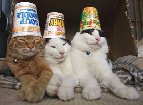 Cats with ramen on their heads