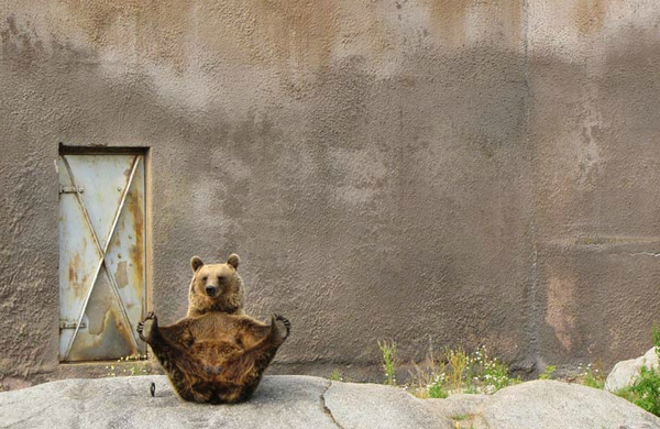 This flexible bear