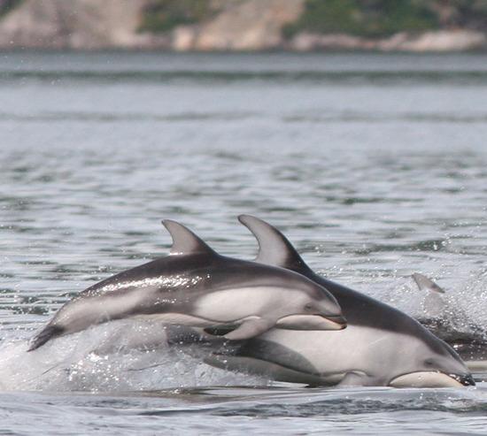 Dolphinpalooza