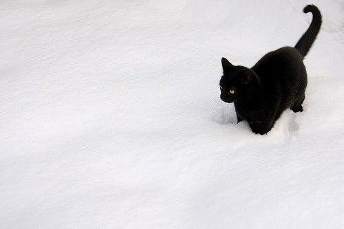 Znalezione obrazy dla zapytania black cat in winter