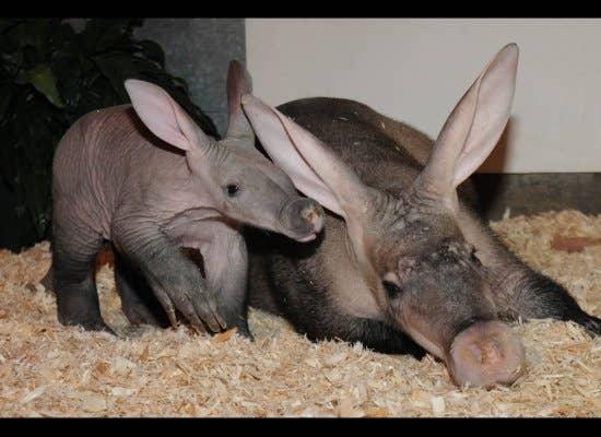 Fuck you i m an aardvark