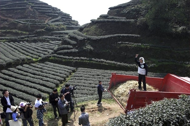 Businessman An Yanshi, right, stands on a truckload of panda droppings collected to be used as fertilizer for his tea farm.