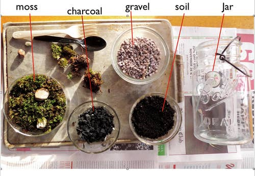 Step 1. Choose an open or closed glass container of some sort.Step 2. Cover the bottom with an inch-thick layer of pebbles or rocks to create a false drainage system for the plant roots.Step 3. Add a thin layer of activated charcoal keeps the water fresh, and prevent mold and bacteria from building up.Step 4. Add a layer of potting soil. They also make a special mix if you choose to use cacti and succulents instead of moss and ferns.Step 5. Place plants in the terrarium, starting with the largest plant first. For more details, check out this terrarium guide here.
