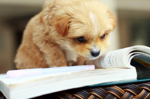 Image result for reading puppy gif